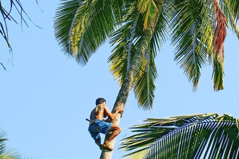 bkl-coconutclimbing-ceremony-800x533